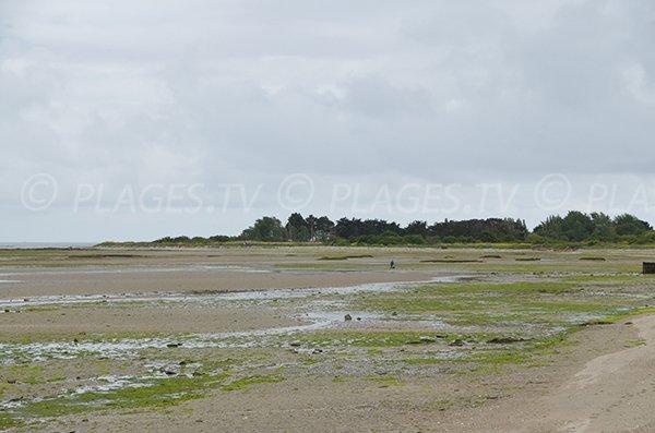 Pêche à pied sur la plage de Banastère