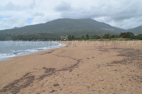 Wild beach in Olmeto in Corsica