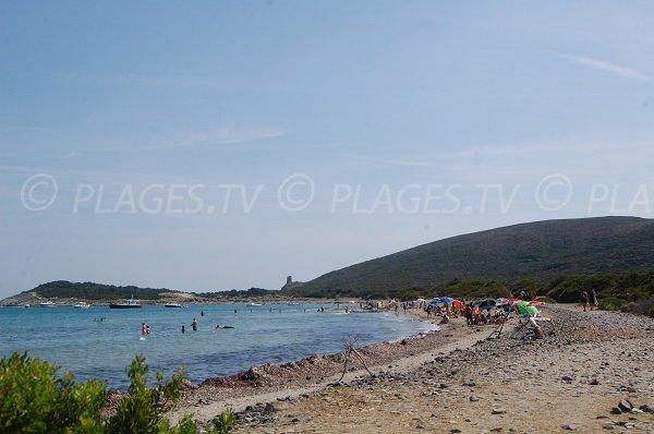 Photo de la plage de Barcaggio avec vue sur la tour d'Agnello - Corse