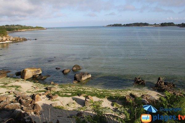 Plage de Barrachou - Algues vertes