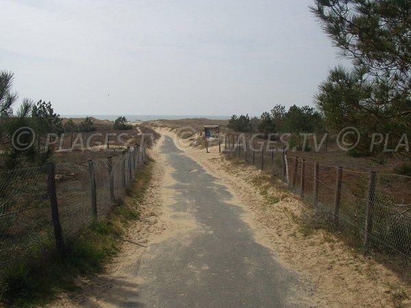 Sentier d'accès à la plage de la Barrique à La Faute sur Mer