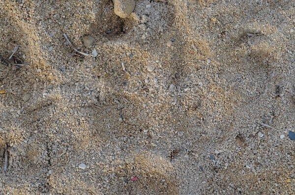 Gros plan sur les gravillons de la plage de Sausset les Pins