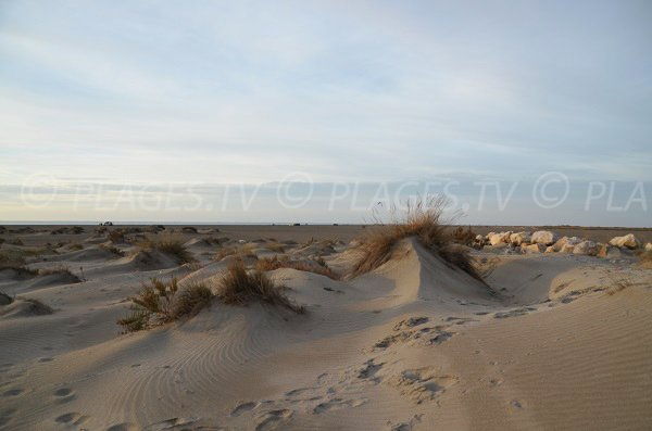 Dunes on the Beauduc beach in France