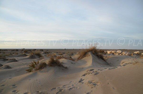 Dunes sur la plage de Beauduc