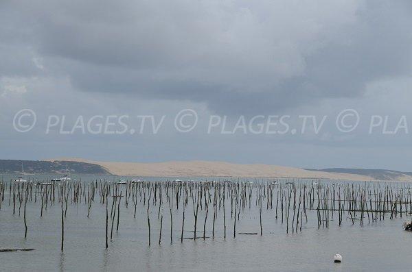 Parc à huitre de Bélisaire avec vue sur Pilat