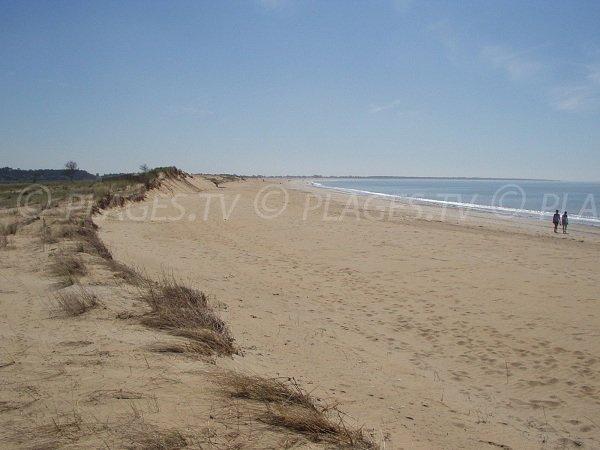 Dunes of Belle Henriette beach in La Tranche sur Mer