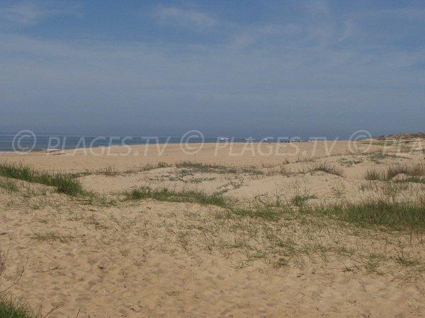 Environnement de la plage de la Belle Henriette à La Tranche