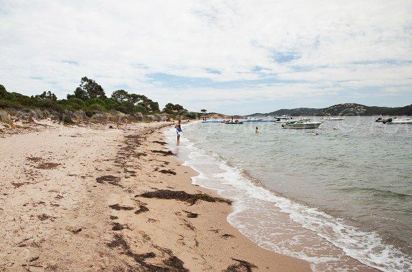 Foto della spiaggia di  Benettu - Lecci - Corsica