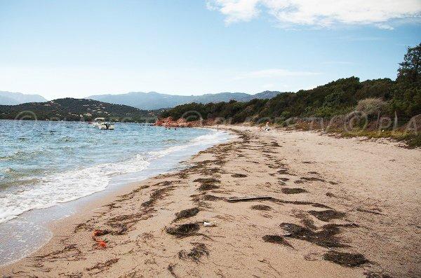 spiaggia Benettu nel golfo di Porto Vecchio - Corsica