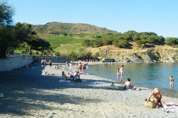 Bernardi Beach In PortVendres PyreneesOrientales France - Location port vendres