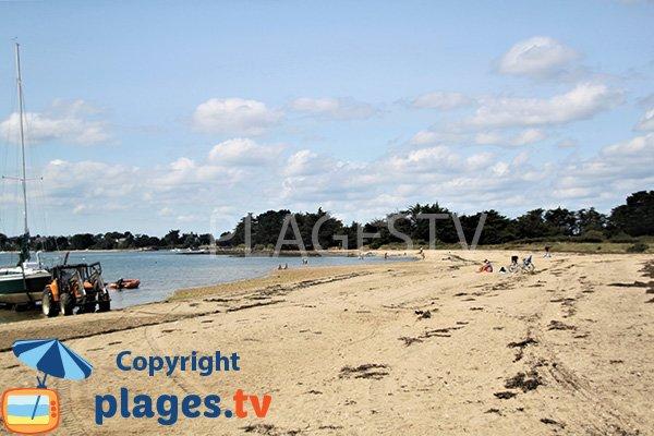 Chiens sur la plage de l'ile d'Arz