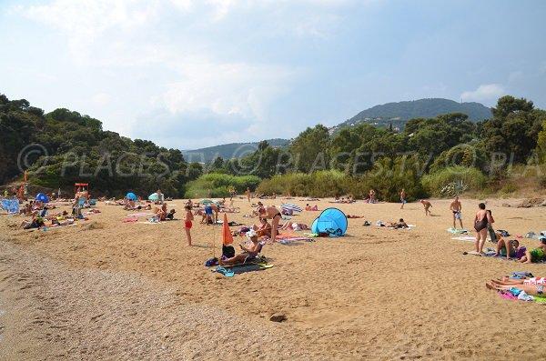 Environnement de la plage de Bonporteau à Cavalaire