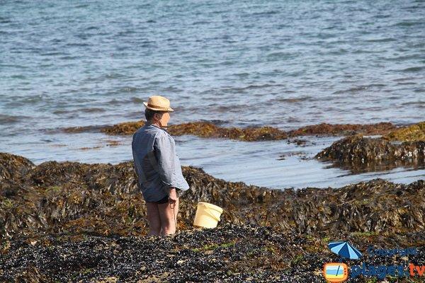 Pêche à pied à Belle Ile - Bordardoué-Est