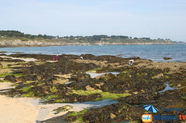 Plage où l'on peut faire de la pêche à pied à Belle Ile - Bordardoué