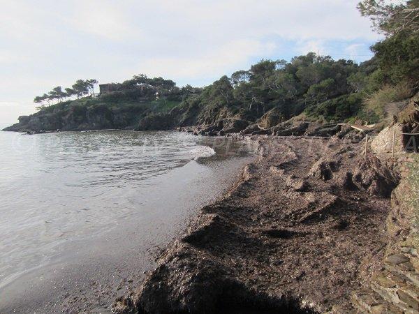 Environnement sauvage pour cette plage du Bouvet à Hyères