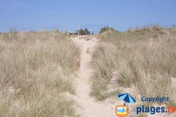 Dunes de la plage de St Jean de la Rivière - 50