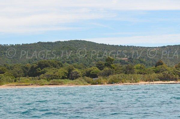 Environnement sauvage de la plage de Cabasson dans le Var à Bormes les Mimosas