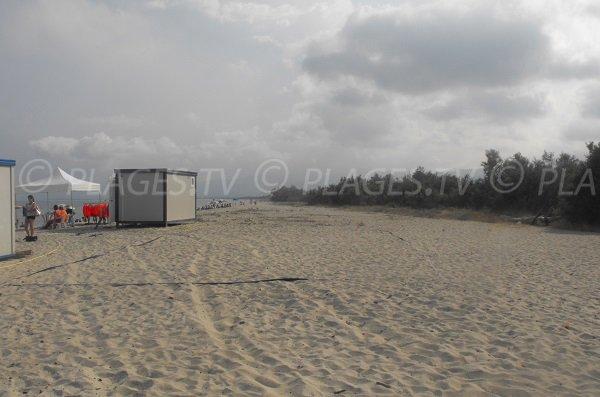 Bordure de la plage de Calzarellu - Maquis et forêt