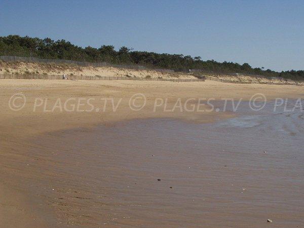 Dunes de la plage des Camélias de La Tranche