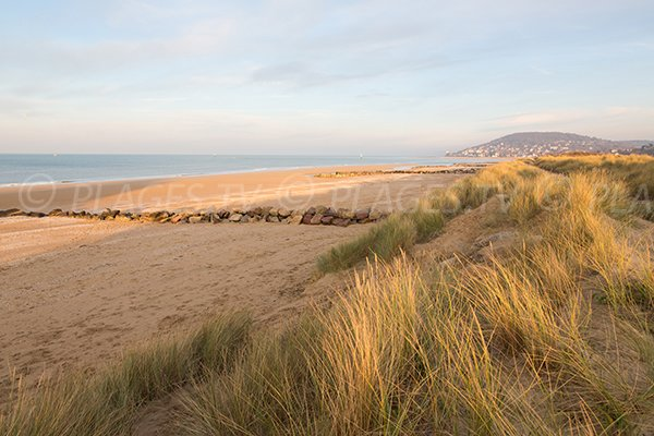 Dunes of Cabourg beach in France
