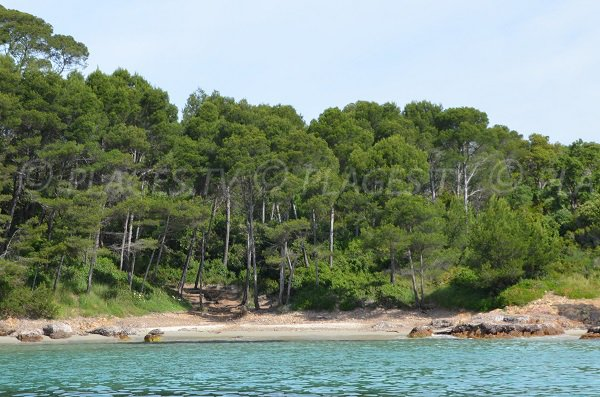 Photo of the Cape Leoube beach in Bormes les Mimosas