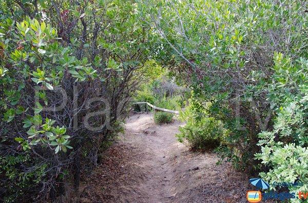Sentier d'accès à la plage de Capicciola