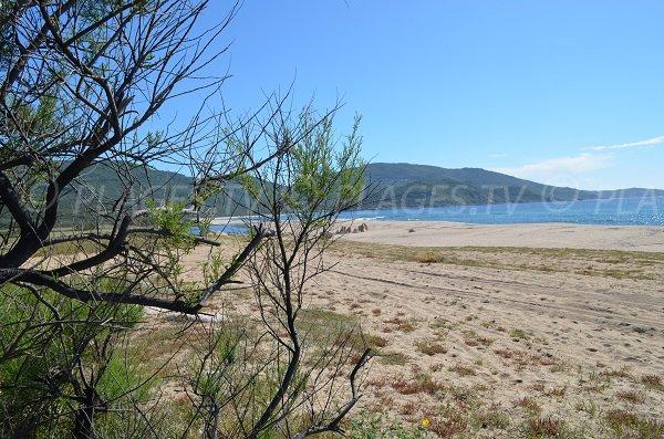 Ambiente spiaggia di Capu Laurosu a Propriano