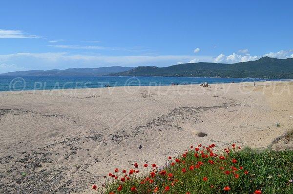 Laurosu beach in Propriano in Corsica