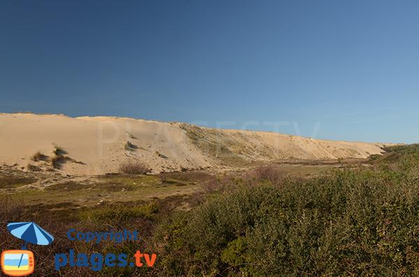Dune de la plage des Casernes - Seignosse