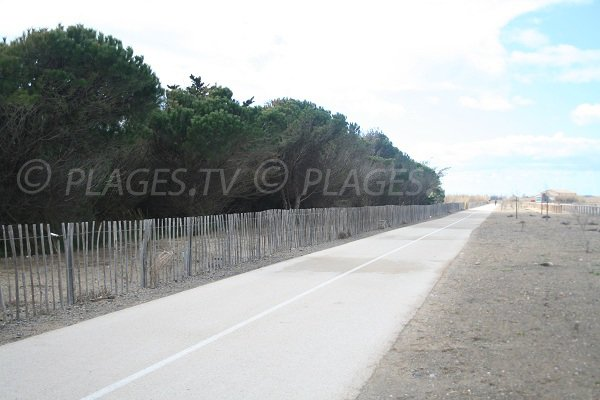 wooded area along the beach of Castellas in Sète