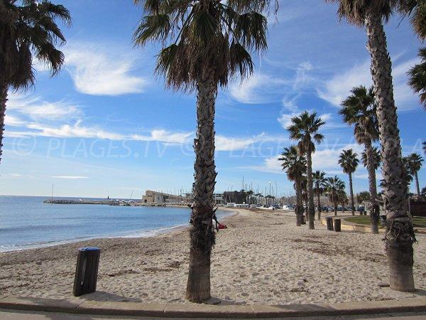 Palmiers sur la plage Centrale de Bandol