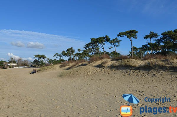 Dune and forest of Cèpe beach - La Tremblade