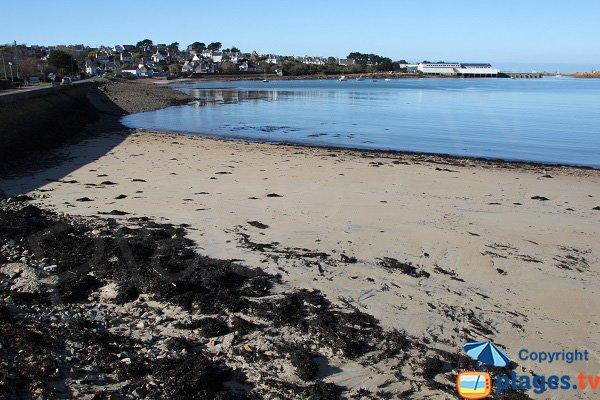 Environnement de la plage du Chantier Naval de Le Diben