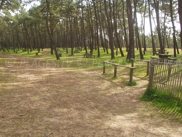 Forêt à côté de la plage des Chardons à La Faute
