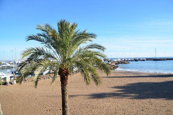 Sand beach near the Harbor of Mandelieu