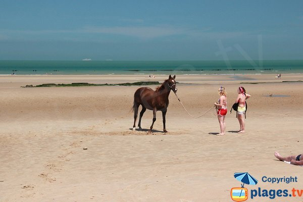 Horse on the beach of Chatelet in Audinghen