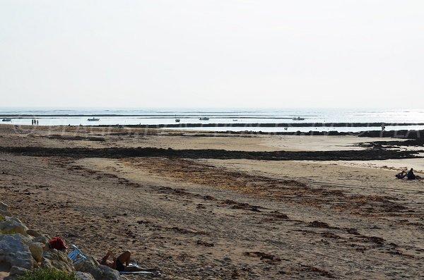 Plage au niveau de la pointe de la Chaucre - Ile d'Oléron