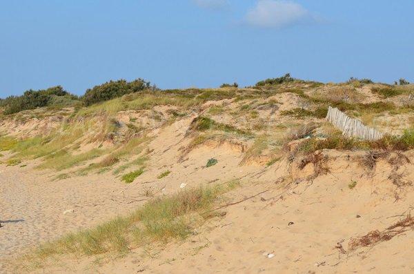 Dunes sur la plage de Chaucre - Ile d'Oléron