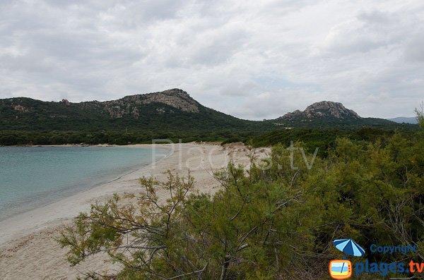 Environnement de la plage de Chevanu - Corse