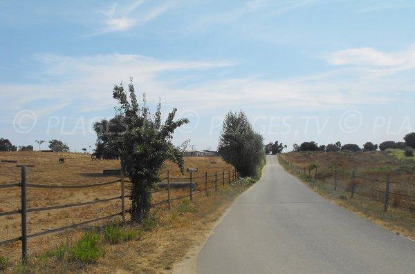 Access road to the Chiosura beach - Linguizzetta - Corsica