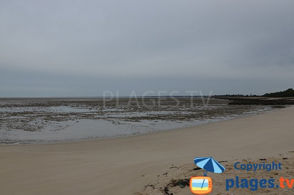 Baignade sur la plage du Collet à Les Moutiers-en-Retz