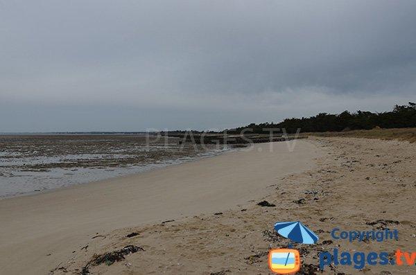 Photo de la plage du Collet à Les Moutiers-en-Retz