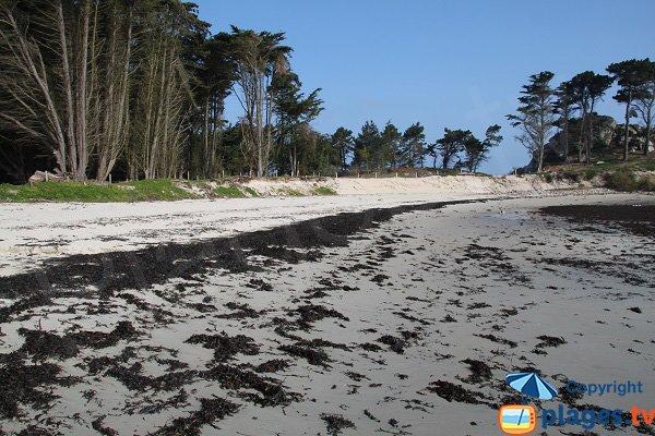 Wild beach in Roscoff - Perharidi