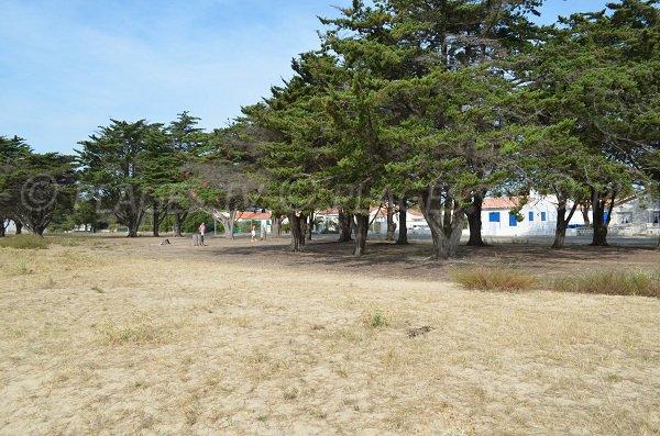 Un environnement de pinède pour la plage aux coquillages