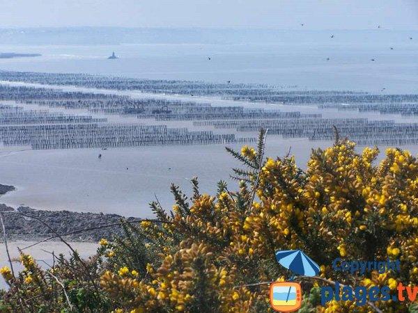 Vue sur les bouchots depuis la plage du Cotentin - Planguenoual