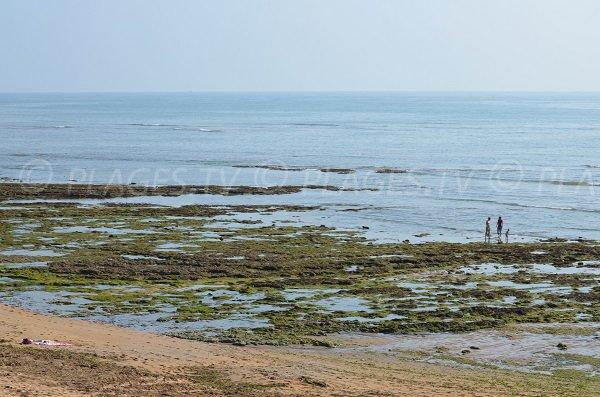 Pêche à pied au nord d'Oléron