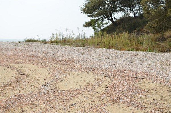 Des coquillages sur la plage de la pointe du Coudepont