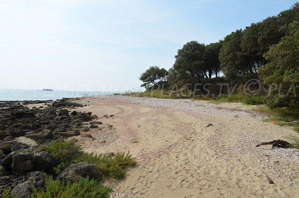 Plage de Coudepont sur l'île d'Aix