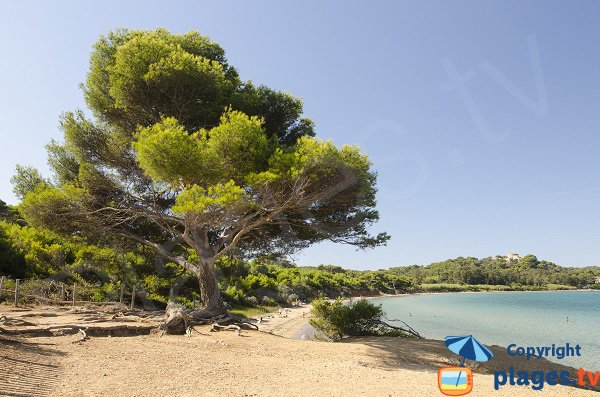 Photo de la plage de la Courtade à Porquerolles