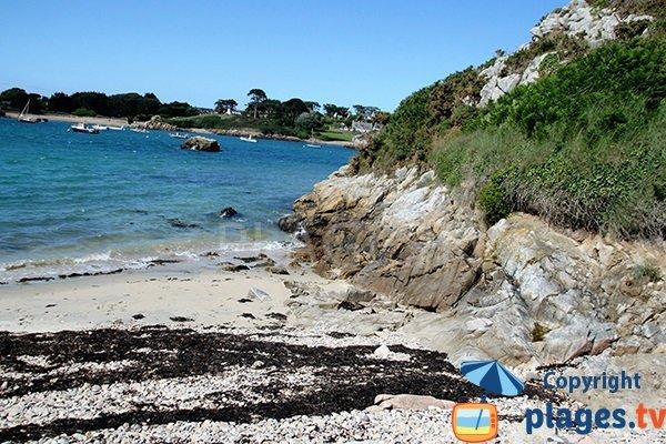 Goémon sur la plage de Bréhat